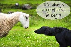 狗遇见绵羊,总是引述美好时光开始 库存照片