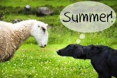 狗遇见绵羊,文本夏天,狂放的自然 图库摄影