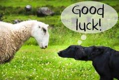 狗遇见绵羊,文本好运 库存照片