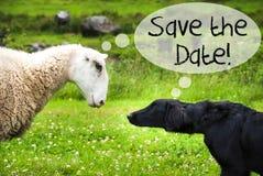 狗遇见绵羊,文本救球日期 库存图片