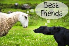 狗遇见绵羊,文本最好的朋友 库存图片