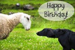 狗遇见绵羊,文本生日快乐 图库摄影