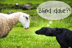 狗遇见绵羊,文本由别人安排的男女初次会面 免版税库存图片