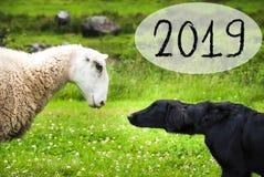 狗遇见绵羊,文本2019年,挪威美好的风景 库存图片
