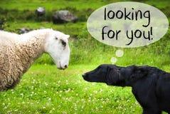 狗遇见绵羊,正在寻找您的文本 库存图片