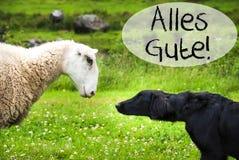 狗遇见绵羊, Alles Gute手段最好祝愿 库存照片