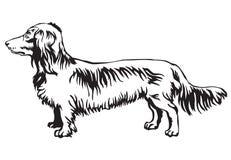 狗长发达克斯猎犬传染媒介装饰常设画象  向量例证