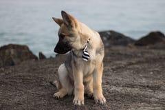 狗阿瑞斯的画象照片 免版税库存图片