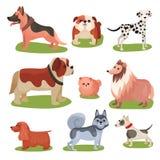 狗集合不同的品种,纯血统宠物五颜六色的例证 向量例证