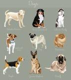 狗集合的另外类型 大和小动物 库存照片