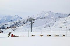 狗雪撬在阿尔卑斯 库存图片