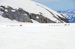狗雪撬运载的乘客 库存照片