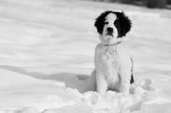 狗雪等待 免版税图库摄影