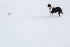 狗雪等待 免版税库存照片
