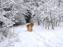 狗雪 免版税库存图片