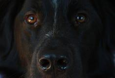 狗面孔 库存照片