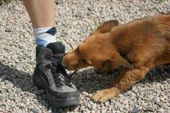 狗鞋子 免版税库存图片