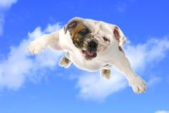 狗飞行 免版税库存图片