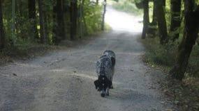 狗,反对路 免版税库存图片