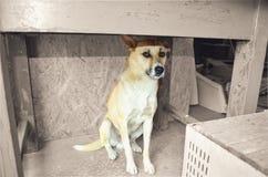 狗,恐惧 恐惧对未知,在桌下,悲伤,在车库的狗 免版税库存图片