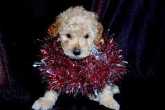 狗,新年 免版税库存照片