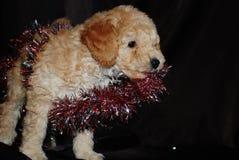 狗,新年 库存图片
