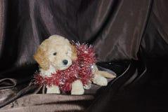狗,新年 库存照片