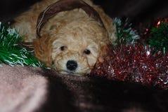 狗,新年 免版税库存图片