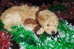 狗,新年 免版税图库摄影