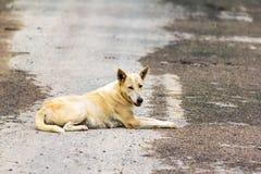 狗,泰国 库存图片