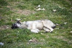 狗,狗,狗,画象尾随图片,狗用不同的品种,说谎的狗,演奏狗,睡觉狗图片,有趣 库存照片