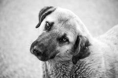 狗,狗,狗,画象尾随图片,狗用不同的品种,说谎的狗,演奏狗,睡觉狗图片,有趣 库存图片