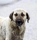 狗,狗,狗,画象尾随图片,狗用不同的品种,说谎的狗,演奏狗,睡觉狗图片,有趣 图库摄影