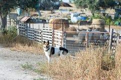 狗,绵羊牧群在一支笔的,在一个五颜六色的村庄 图库摄影