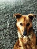 狗,自然,花, orang,红色 库存照片