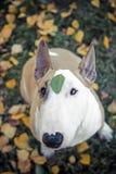狗,花,哀伤 免版税库存图片