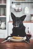 狗,香蕉 免版税库存照片