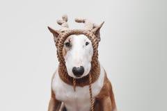 狗,鹿 免版税库存图片
