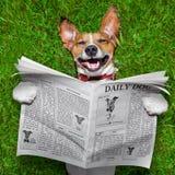 狗读书报纸 库存图片