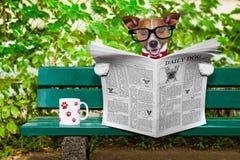 狗读书报纸 免版税图库摄影