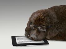 狗读书片剂 免版税图库摄影
