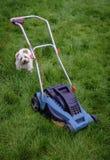 狗&割草机在长的草 库存图片
