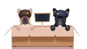 狗移动的箱子夫妇  免版税库存图片