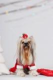 狗-圣诞老人 库存照片