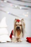 狗-圣诞老人 免版税库存图片