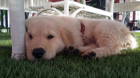 狗婴孩 图库摄影