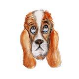 狗水彩和墨水顶头例证 免版税库存照片