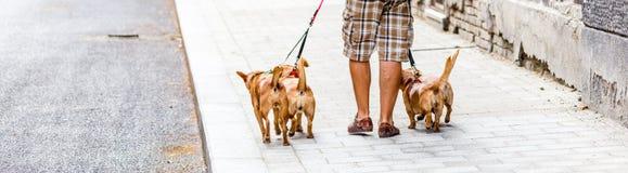 狗临时替人照看孩子的人人和四条狗 图库摄影