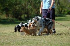 狗临时替人照看孩子的人工作 免版税库存照片