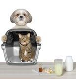 狗给狩医诊所带来了他的猫朋友 免版税库存图片